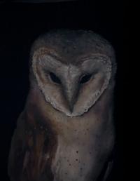Owl (Totem)