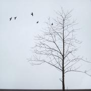 Untitled, Tree Series